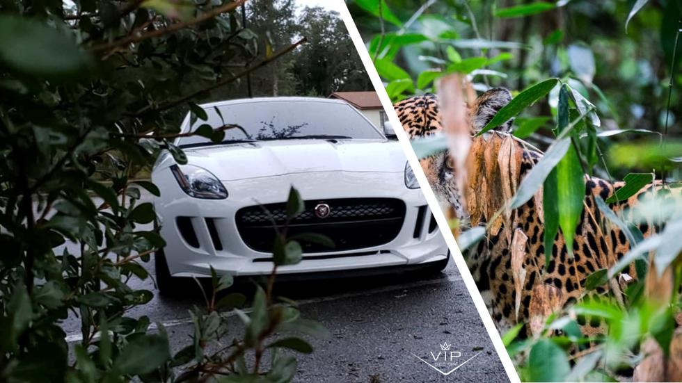 Jaguar F-Type Predator Package Pops and Bangs